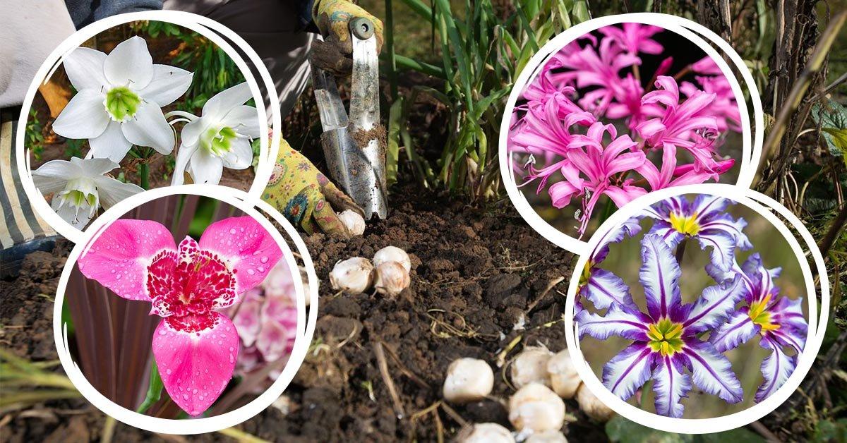 Цветник из луковичных по всем правилам: сажаем осенью, любуемся весной