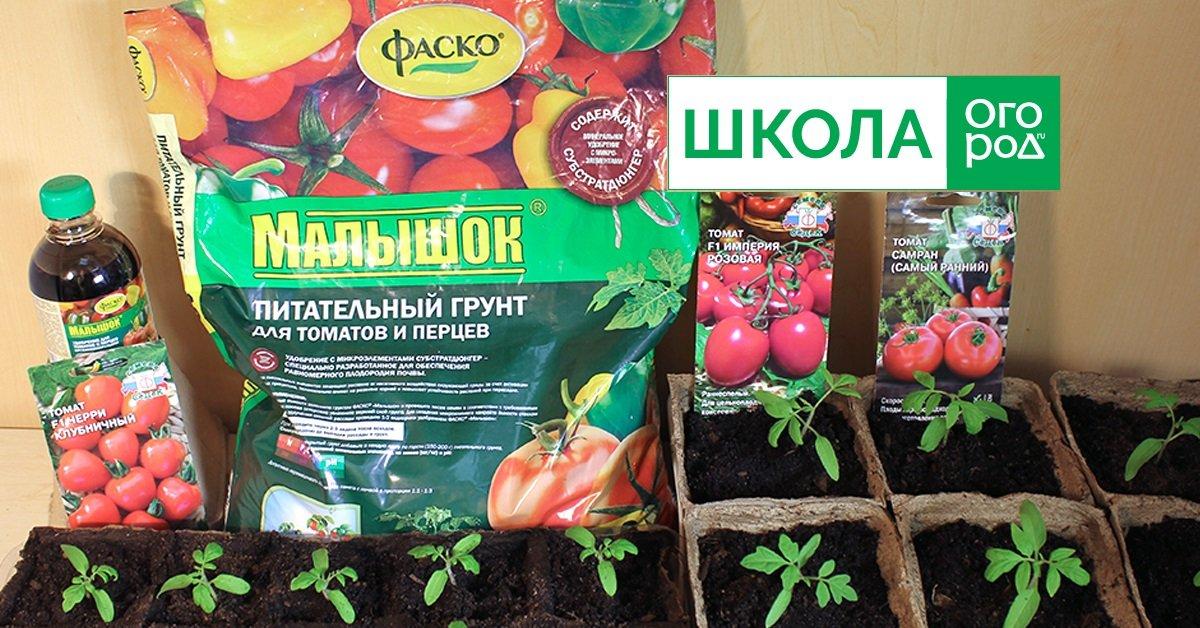 Как готовить семена томатов к посадке