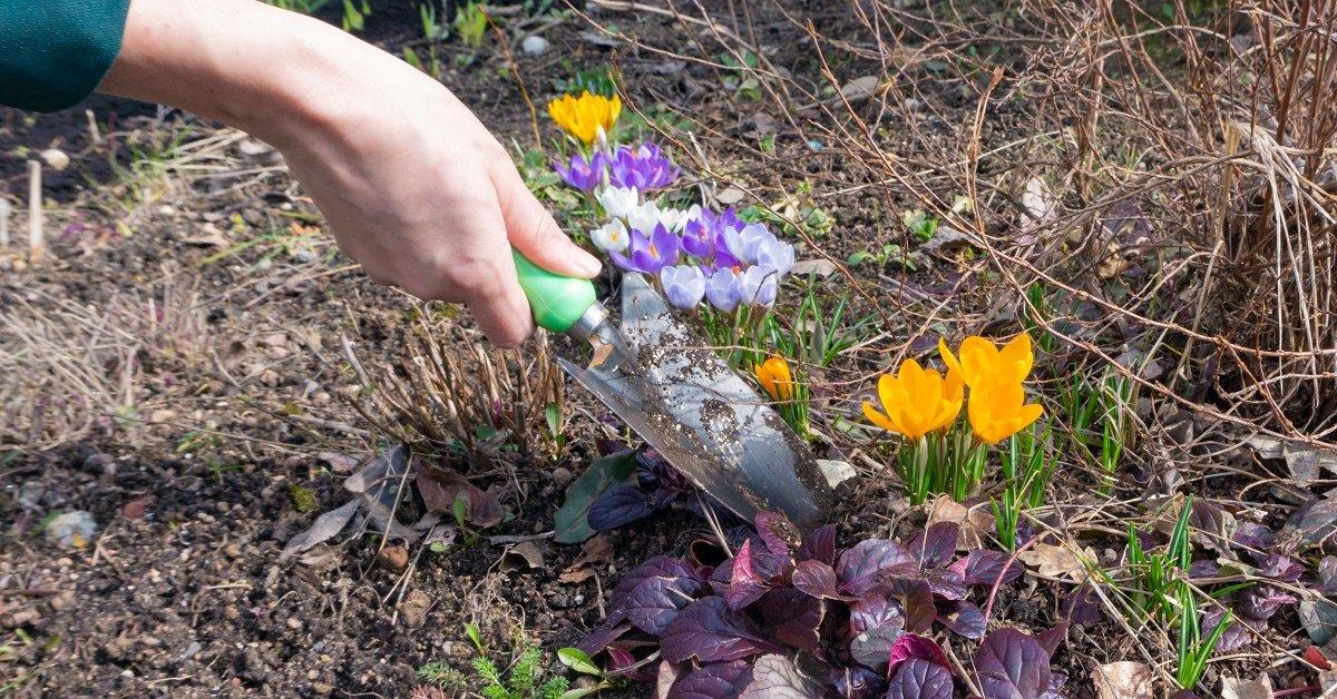 Можно ли пересаживать цветы осенью