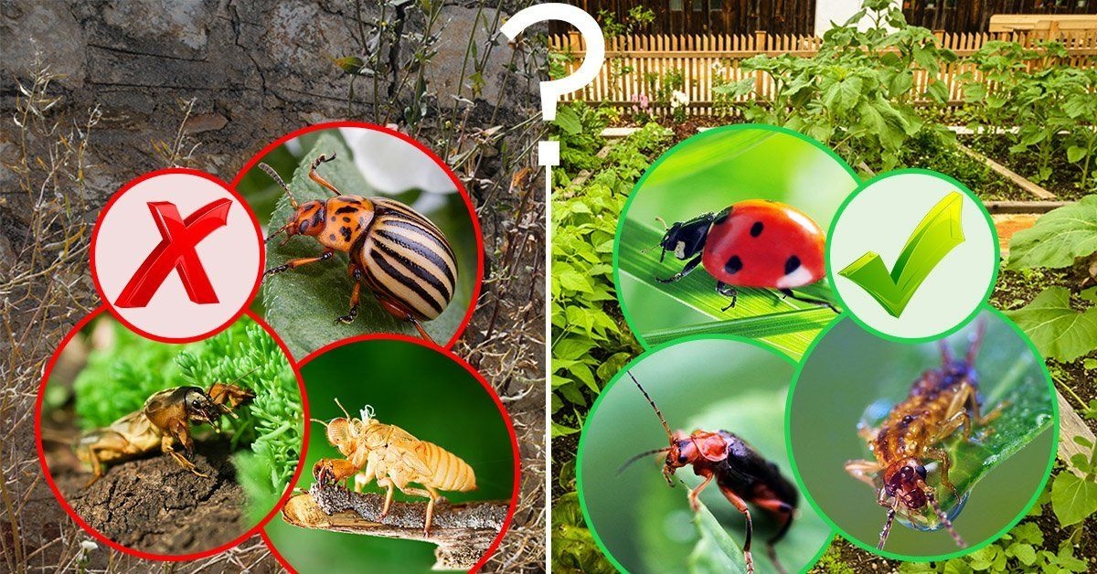 Полезные и вредные жуки в огороде – фото, описания и что с ними делать