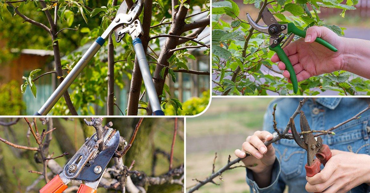 Как сделать секатор для обрезки деревьев своими руками 51