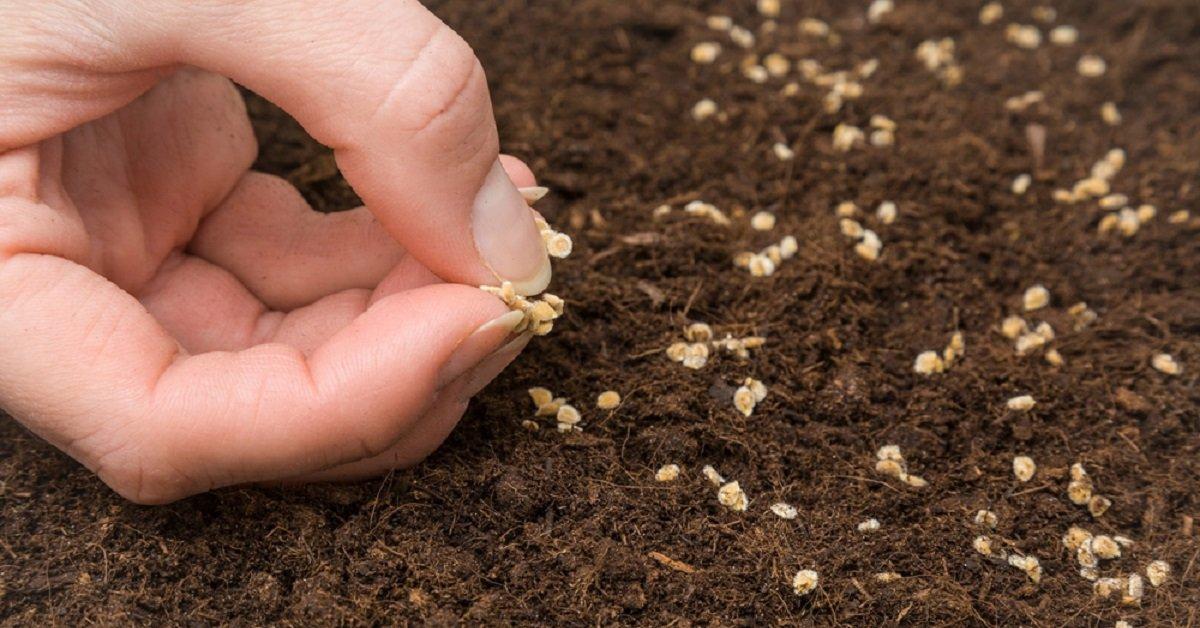 Как вырастить рассаду помидоров в домашних условиях?