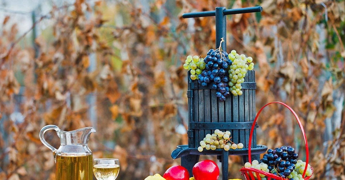 Открываем бизнес по производству вина