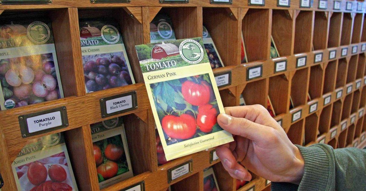Самые урожайные сорта томатов для открытого грунта: описание, характеристика помидоров, фото