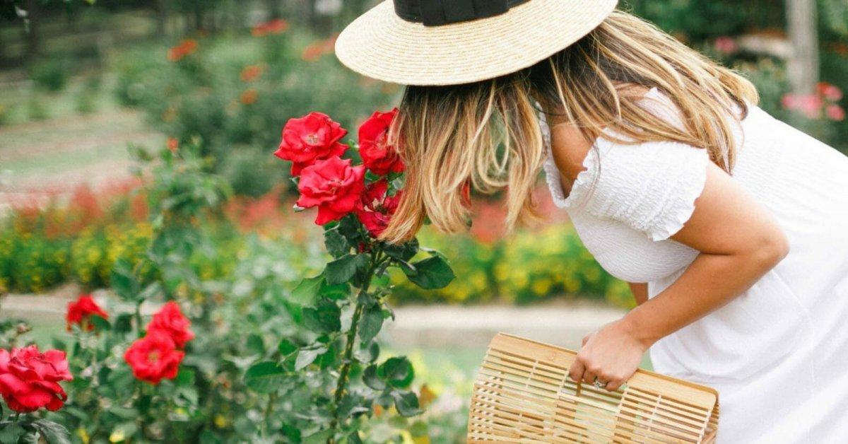 images|cms-image-000064906 Ароматные розы – лучшие сорта для вашего сада
