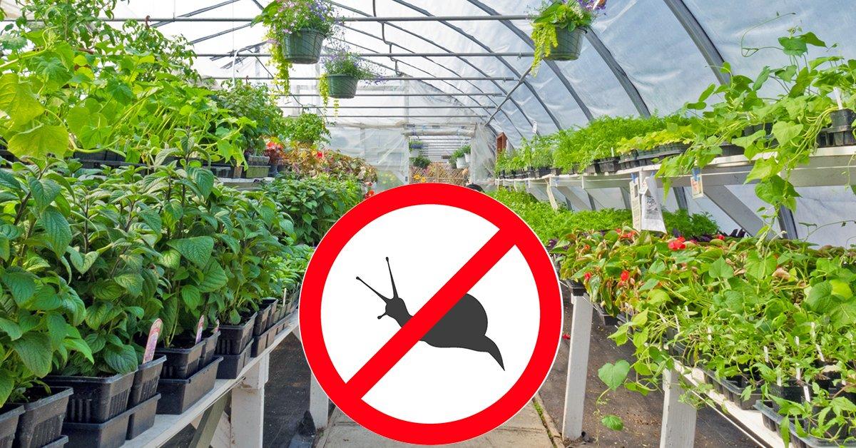 Слизни и улитки – избавляемся от непрошеных гостей в саду и огороде