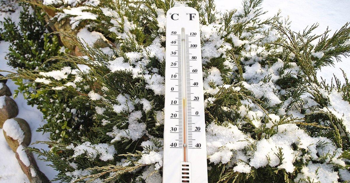 Как помочь хвойным пережить зиму?