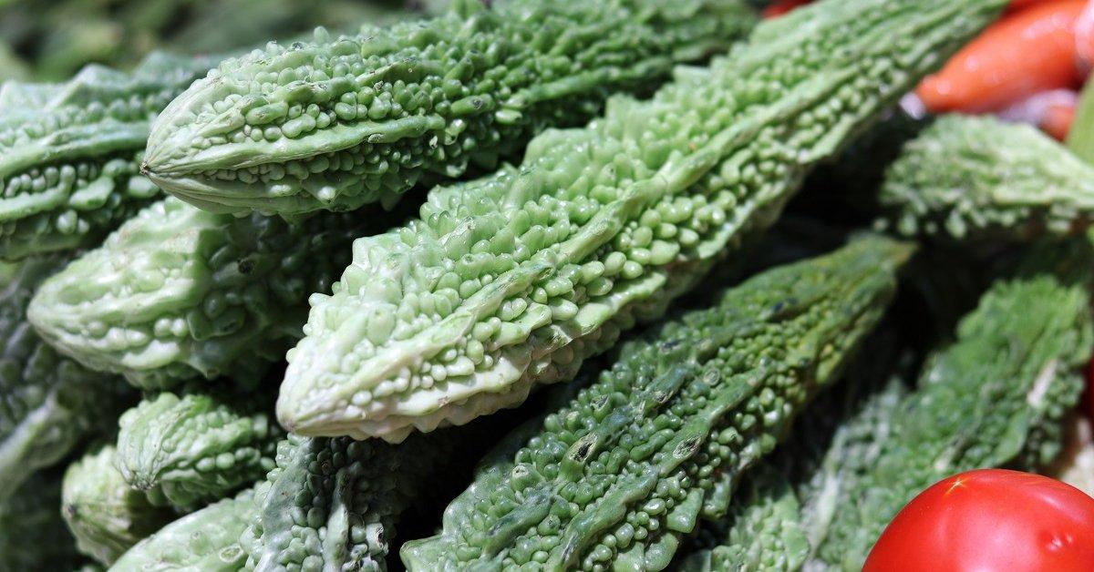 Растение бешеный огурец: свойства, фото, где растет, применение