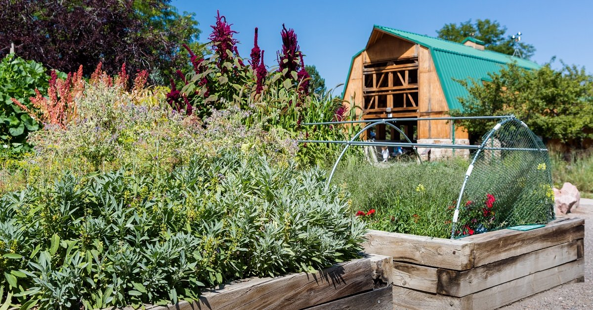 Ошибки дачников, садоводов и огородиков - размышления и советы