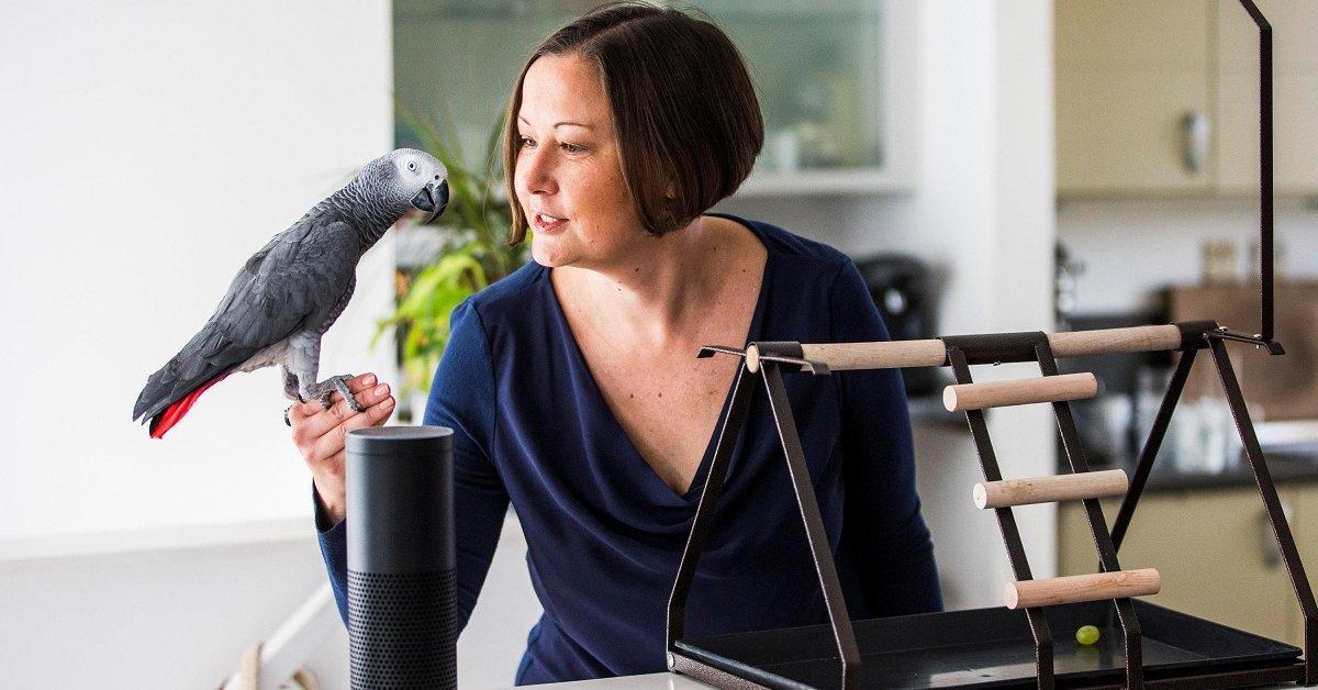 Какие попугаи лучше всех говорят — выбираем птицу-говоруна