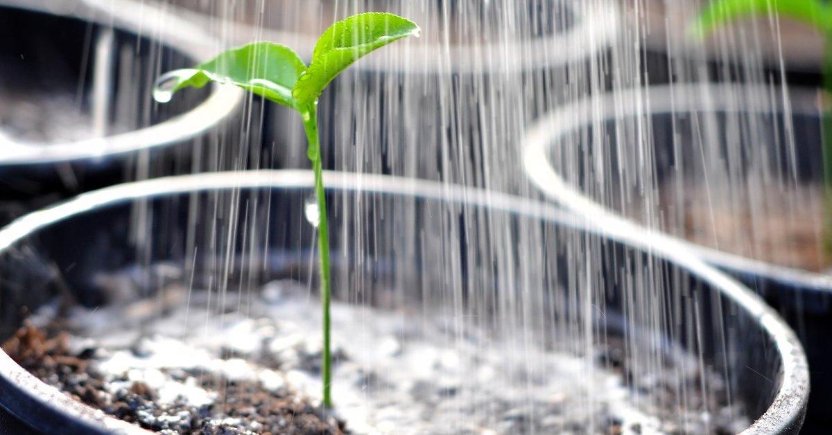 Регуляция роста и развития растений