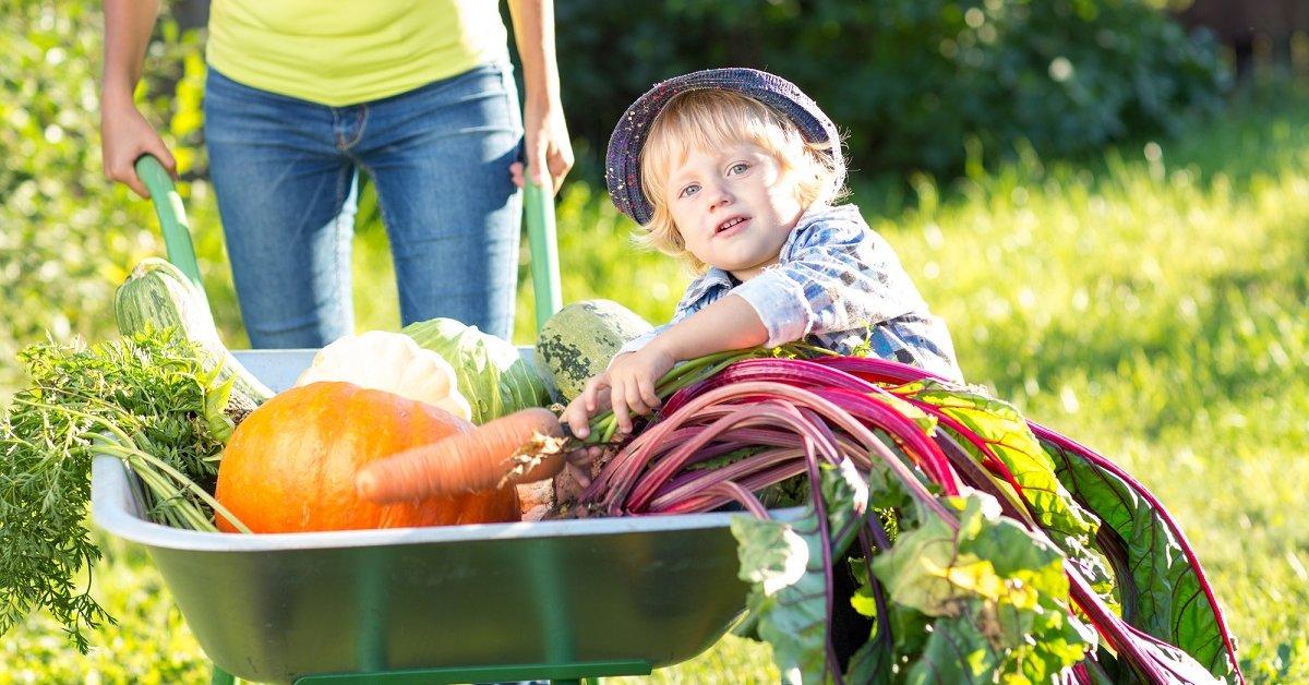 Уход и посадка овощей