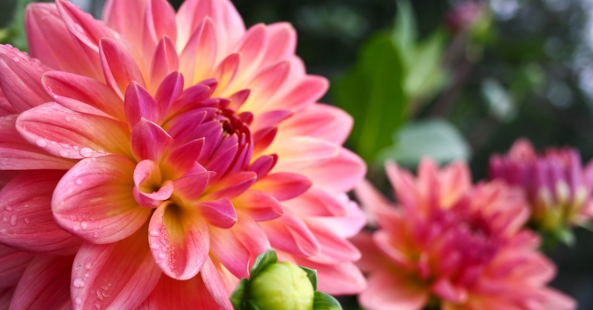 Каталог комнатных цветов и растений с фото и названиями || Цветы большого размера