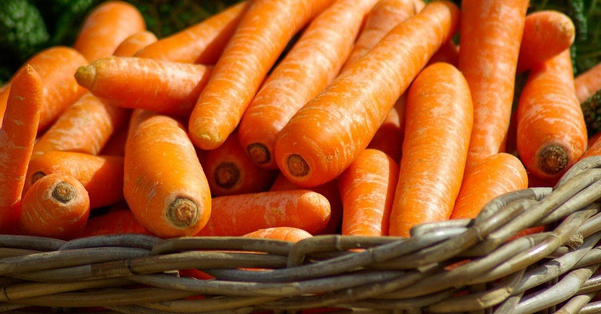 Морковь для зимнего хранения хорошие сорта