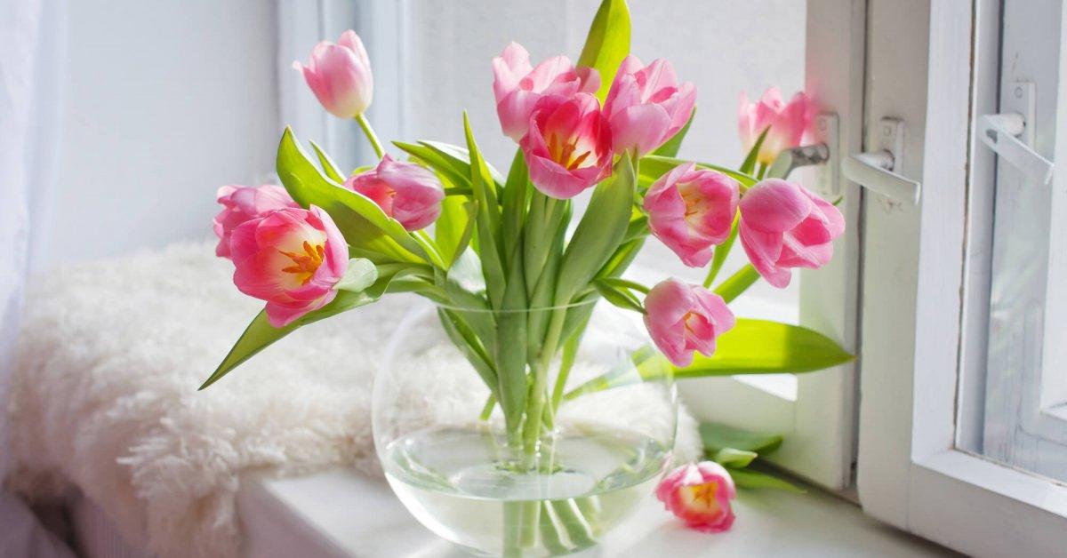 Как дольше сохранить срезанные тюльпаны в домашних условиях