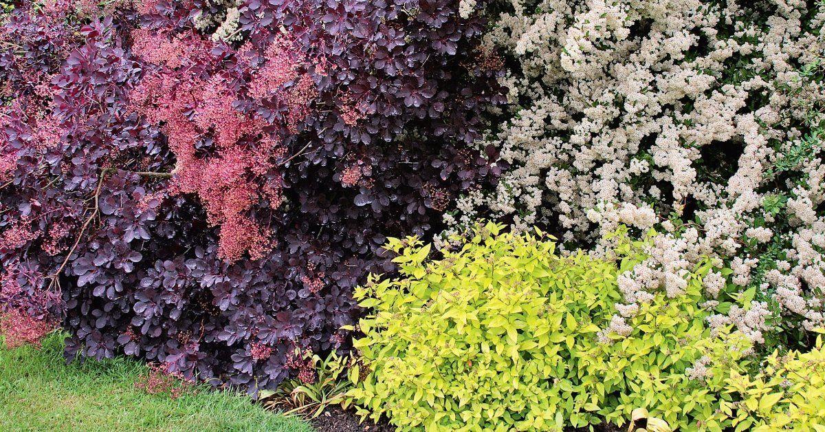 Декоративные кустарники для сада – фото с названиями