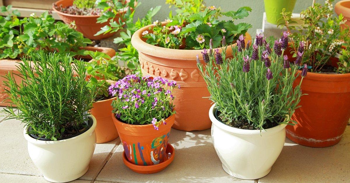Хвойные комнатные растения- виды, уход, фото с названиями