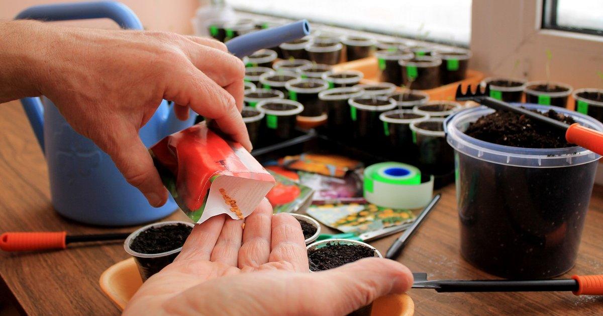 Как проверить всхожесть семян помидоров способы определить узнать