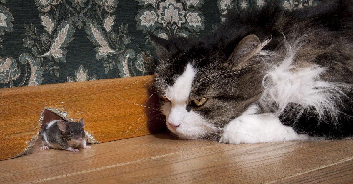 Избавиться от мышей в частном доме народными
