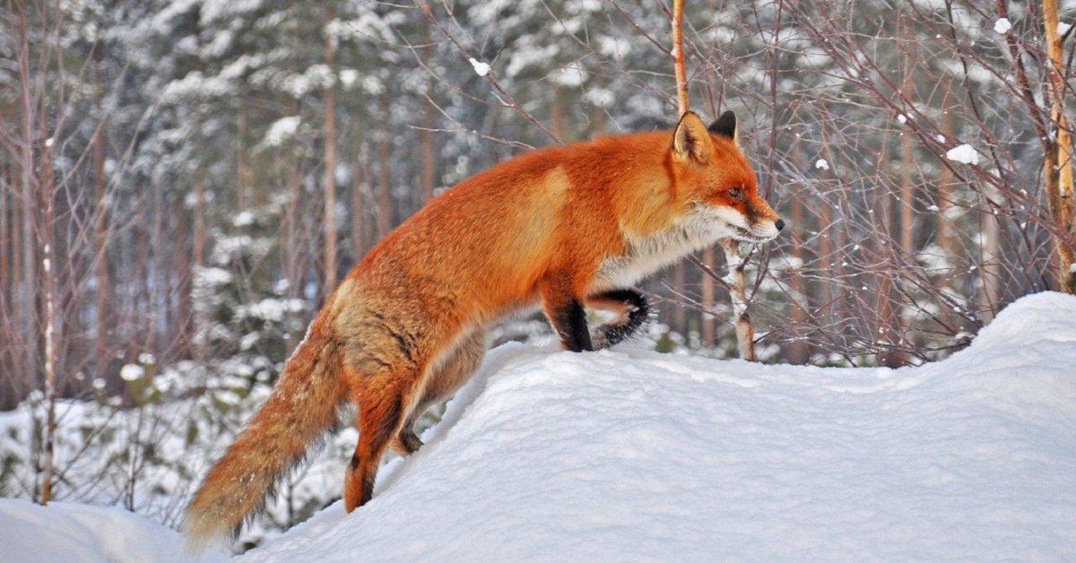 Найди всех животных - картинки на внимание - IgraZa.ru. Игры ... | 628x1200