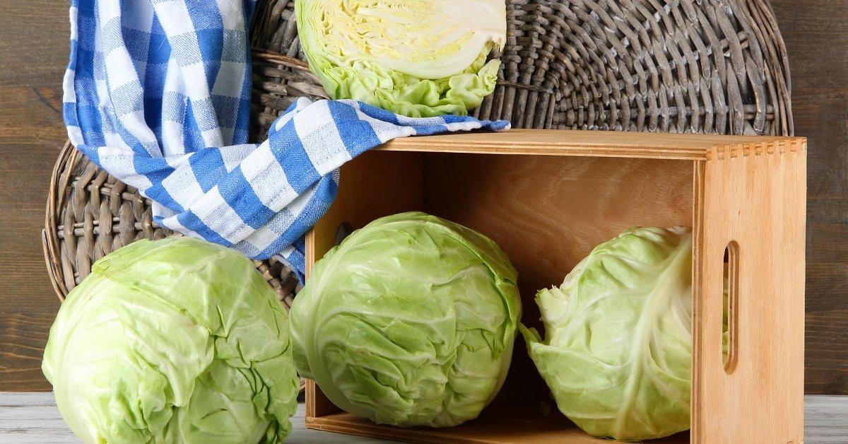 Как правильно срезать капусту на хранение