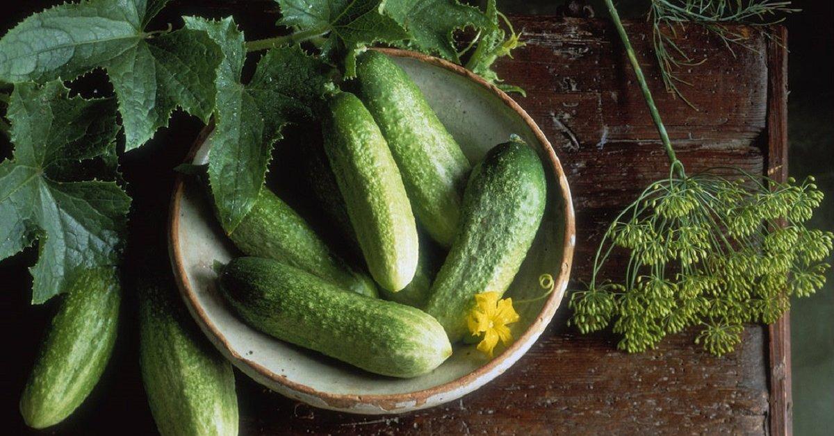 Лучшие урожайные самоопыляемые огурцы для открытого грунта