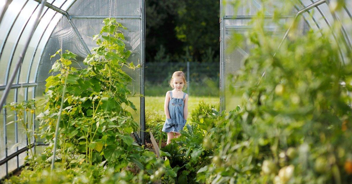 Что посадить вокруг теплицы - Сад и огород