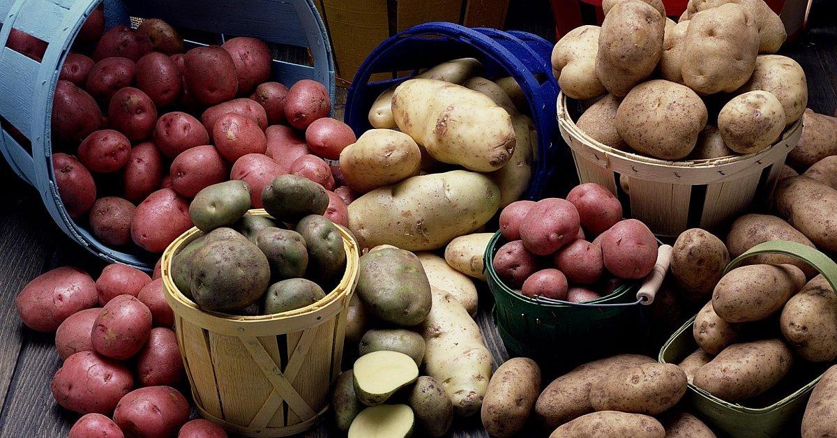 Сорта картофеля по алфавиту фото и описание