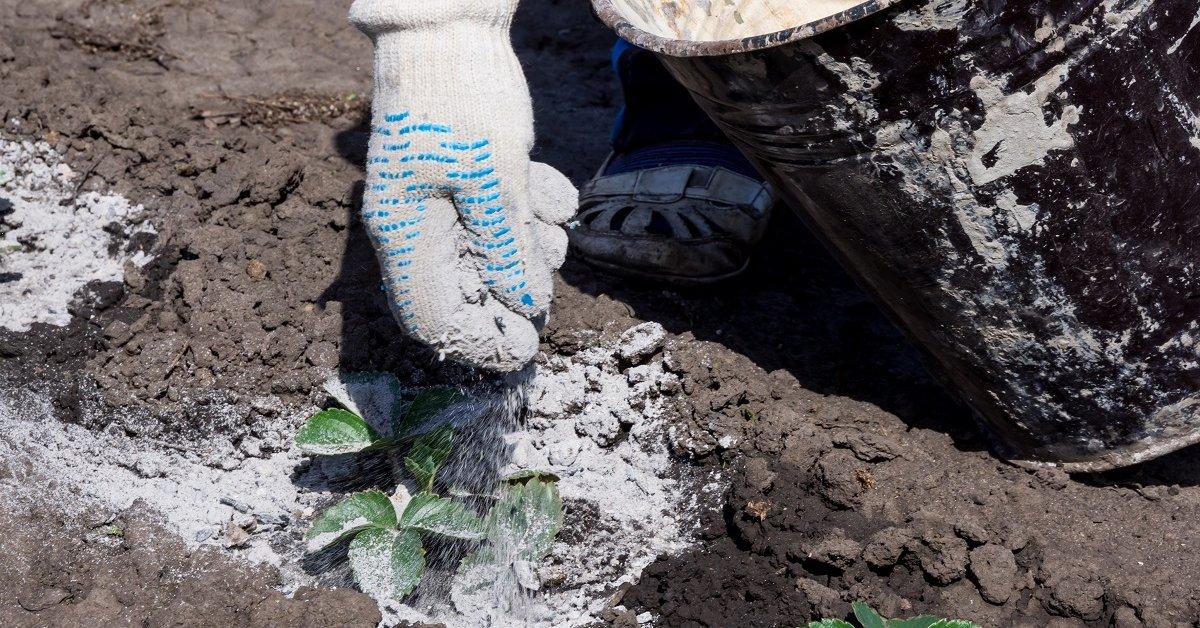 Зола— отличное натуральное комплексное удобрение. Как ее использовать в саду и огороде