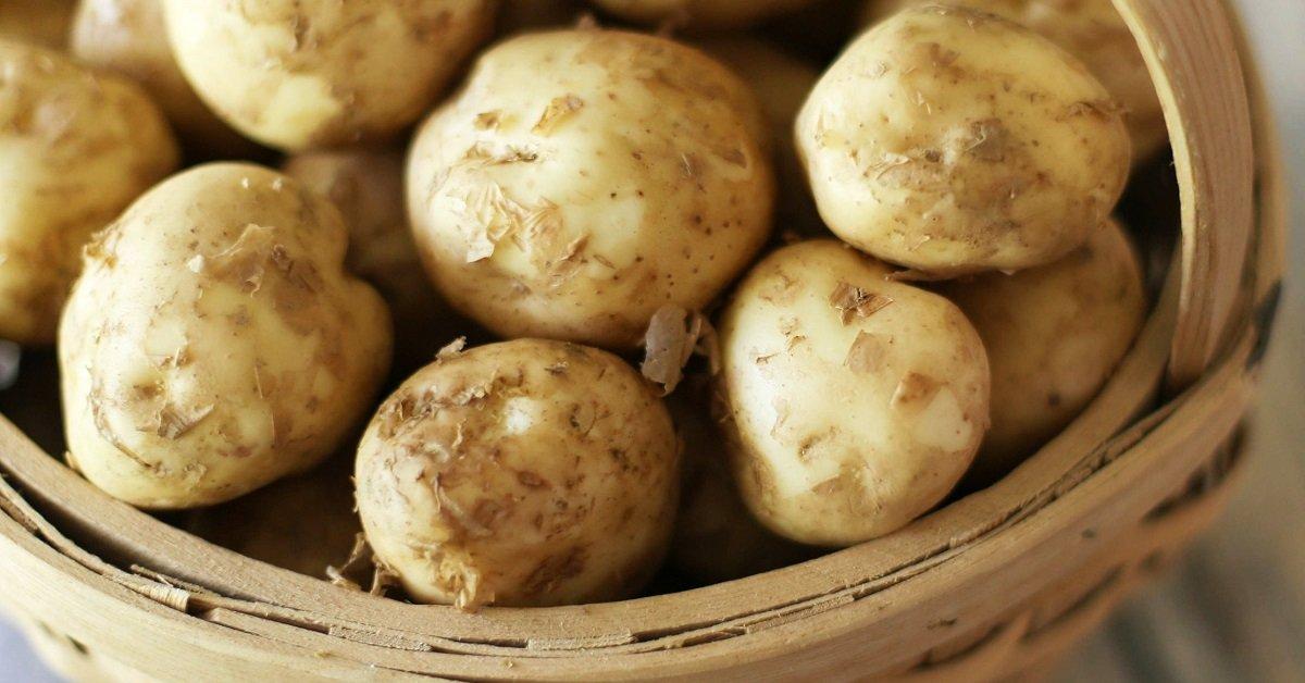 Как сохранить картошку в земле до весны