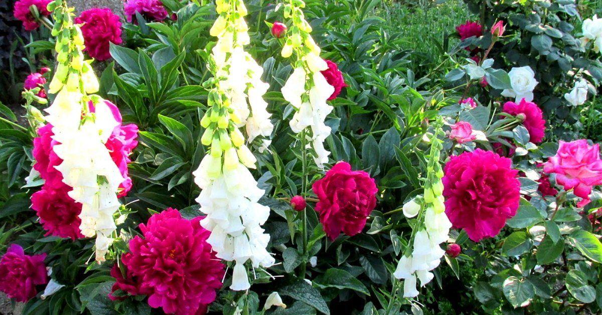 Встречаем лето в цветнике