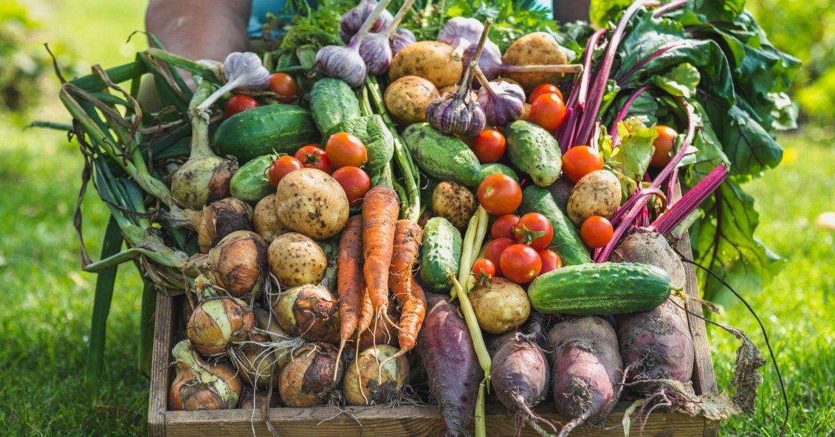картинки огород сбор урожая образом решила