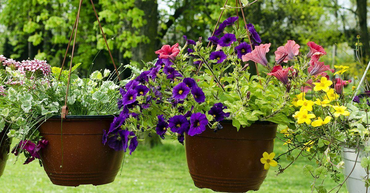 Как сохранить цветы во время отпуска
