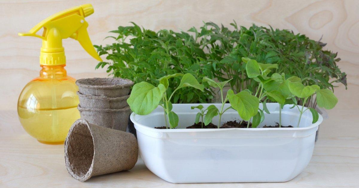 Правила выращивания любой рассады овощей в домашних условиях