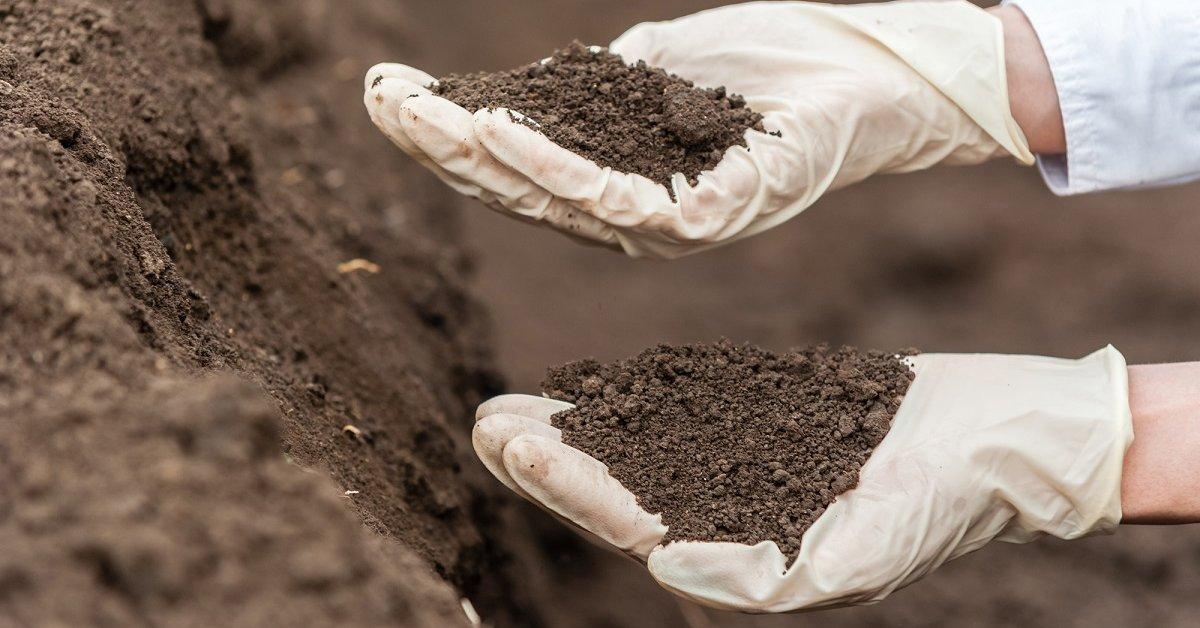 Какая почва самая неплодородная укажи ответ