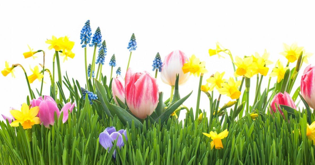 Календарь цветения цветов по месяцам таблица