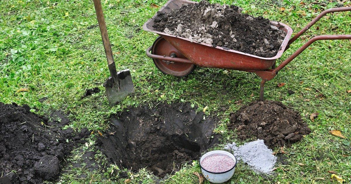 Время готовить посадочные ямы: как правильно
