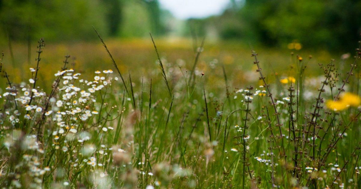 Какие растения растут на кислых почвах: цветы, овощи, деревья и кустарники