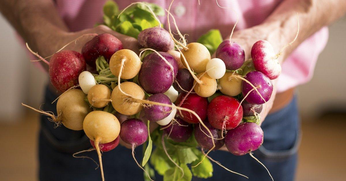Редис – описание, фото, сорта, выращивание, польза