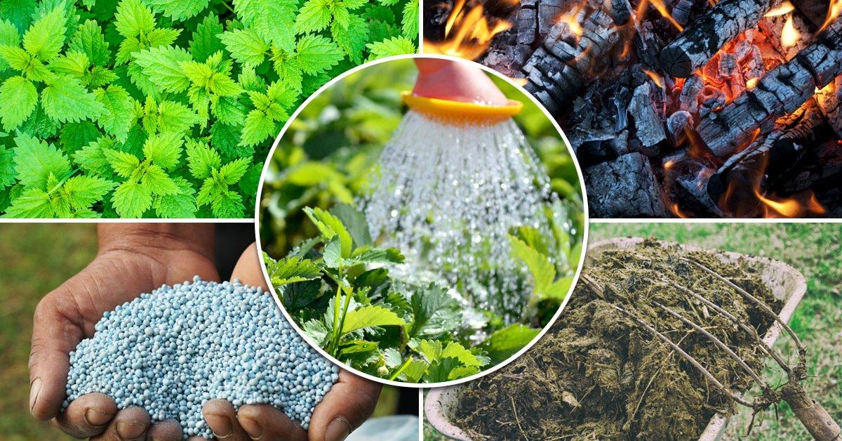 Какие удобрения для посадки клубники осенью