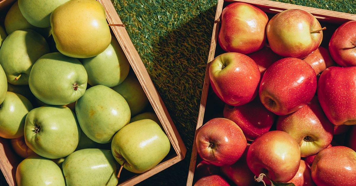 Сорта яблок - самые лучшие ранние, летние и зимние популярные новинки