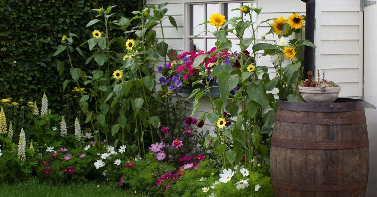 Идеи для ленивого сада: выбираем стиль и неприхотливые растения