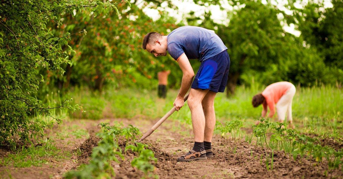 Огородные работы  опасная нагрузка на позвоночник