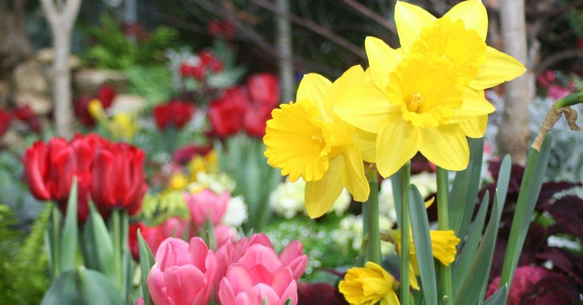 Какие удобрения надо вносить весной