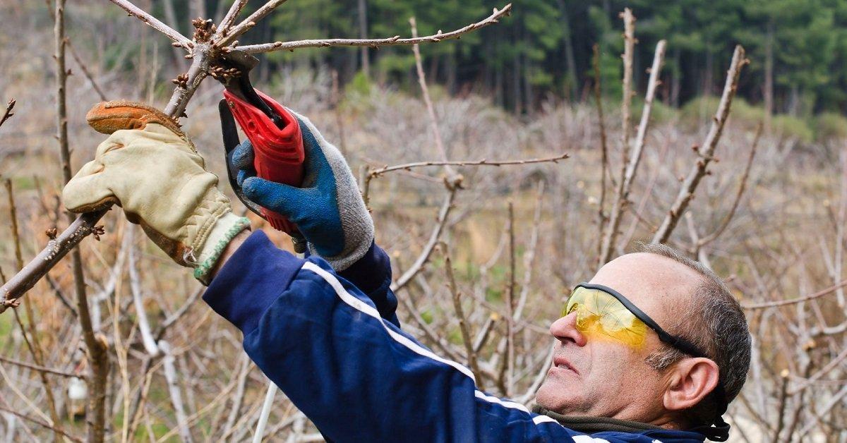 Обрезка формирование вишни когда и как правильно делать летом схема
