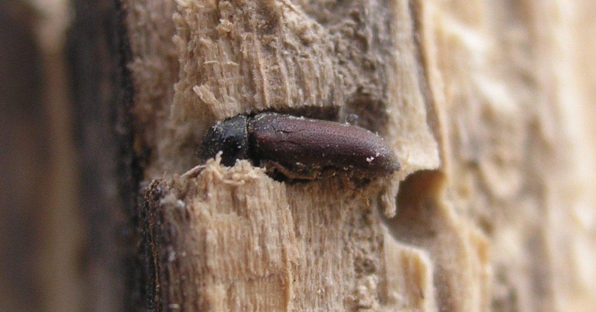 Средство от жуков в доме