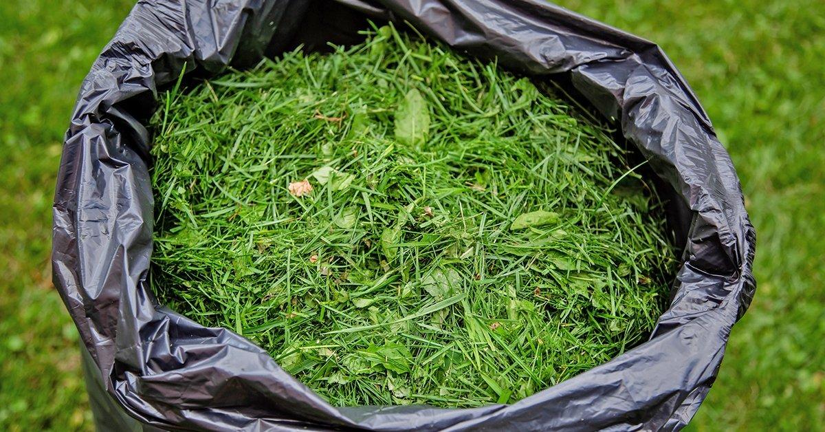 Когда сеем газон скошенную траву убирать