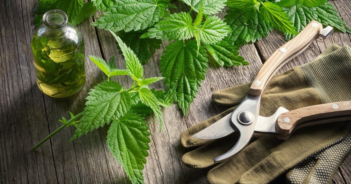 Настой из крапивы для подкормки растений: как приготовить зеленое удобрение из трав