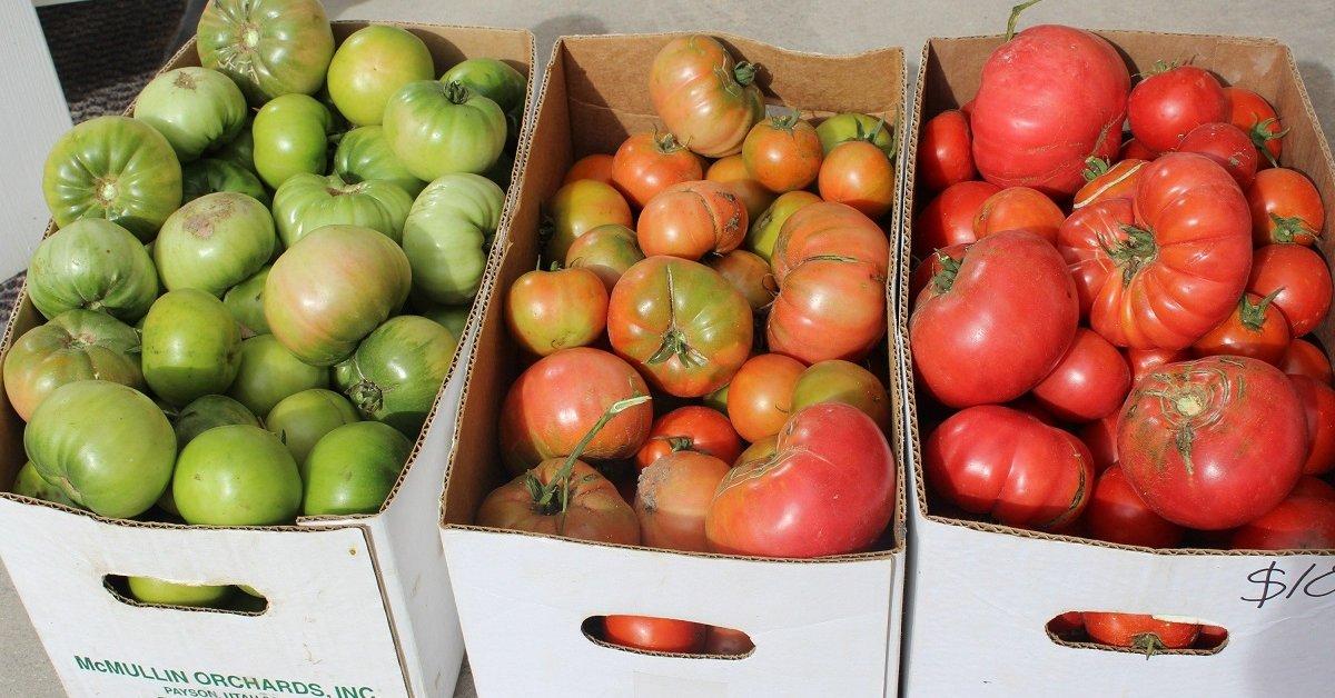 Как правильно хранить дома зеленые помидоры до созревания, чтобы они покраснели