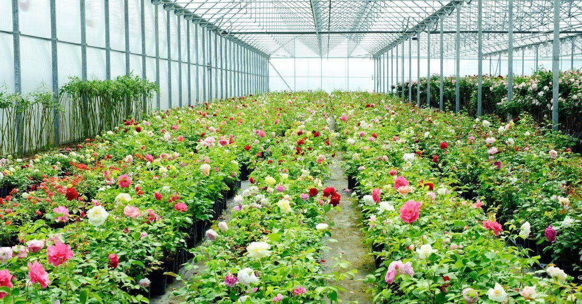 Предприятие по выращиванию цветов 58
